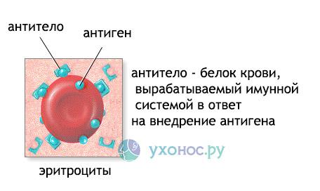 Мононуклеоз инфекционний: симптоми, лечение у детей, взрослих