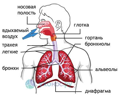 Хрипи в легких при дихании: причини, лечение у детей и взрослих