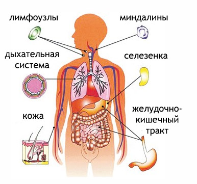 Иммуномодулятори (иммуностимулятори): препарати, список, для детей