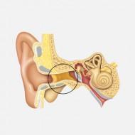 Темная сера в ушах у ребенка. Почему происходит накопление серы в ушах у ребенка