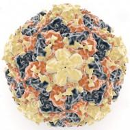 Риновирус у детей до года