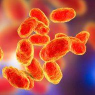 Гемофильный менингит у детей